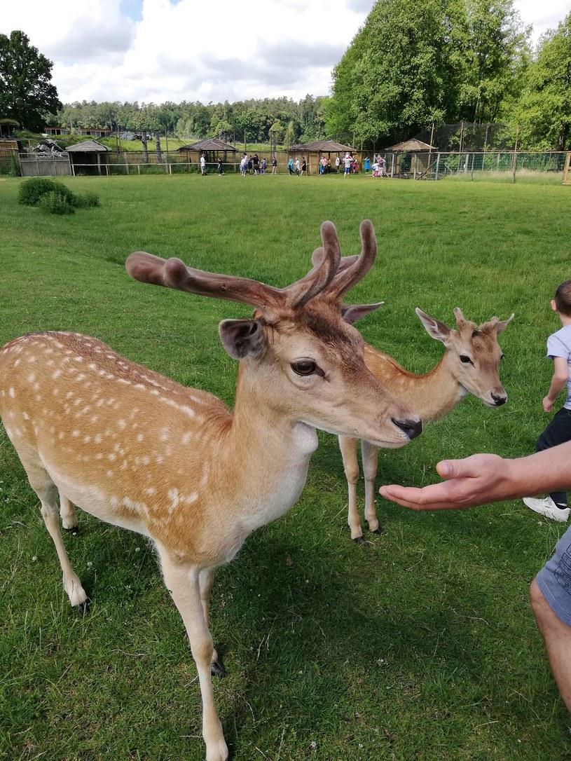 Park Dzikich Zwierząt w Kadzidłowie to miejsce dla całej rodziny! /Gabriela Kurcz /INTERIA.PL
