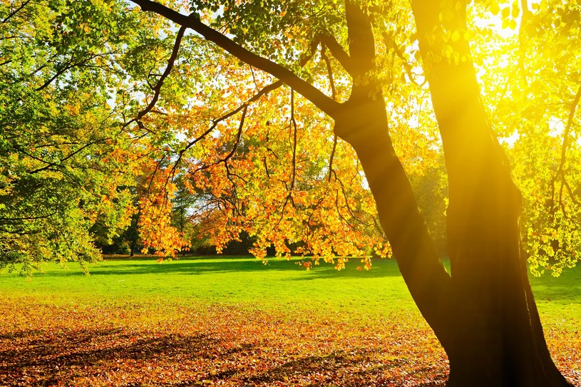 Jordan's park is visited by crowds of residents of Krakow / 123RF / PICSEL