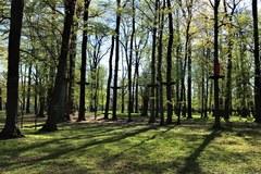 Park Miejski w Bielawie