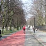 Park Śląski: 1300 drzew do wycięcia? Marszałek protestuje