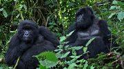 Parki narodowe Rwandy