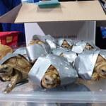 Pasażer chciał przemycić w bagażu ponad tysiąc żółwi!