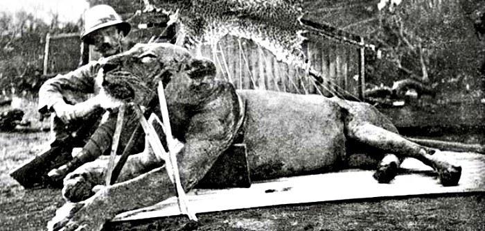 Patterson z pierwszym zastrzelonym przez siebie lwem /materiały prasowe