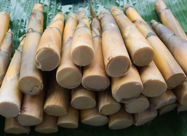 Pędy bambusa /123RF/PICSEL