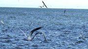Pejzaż portów rybackich okiem artystki