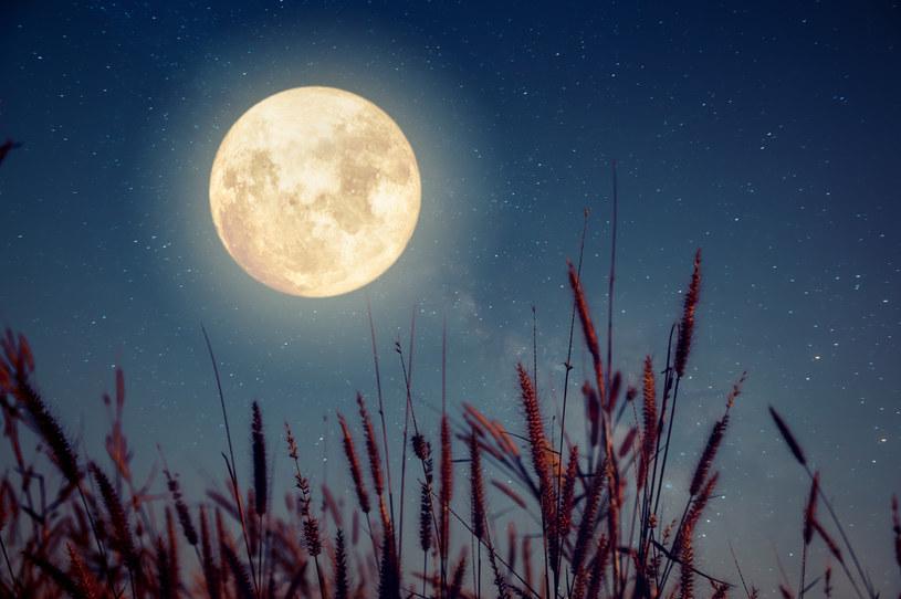 Pełnia Księżyca /123RF/PICSEL