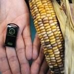 Pendrive z kukurydzy