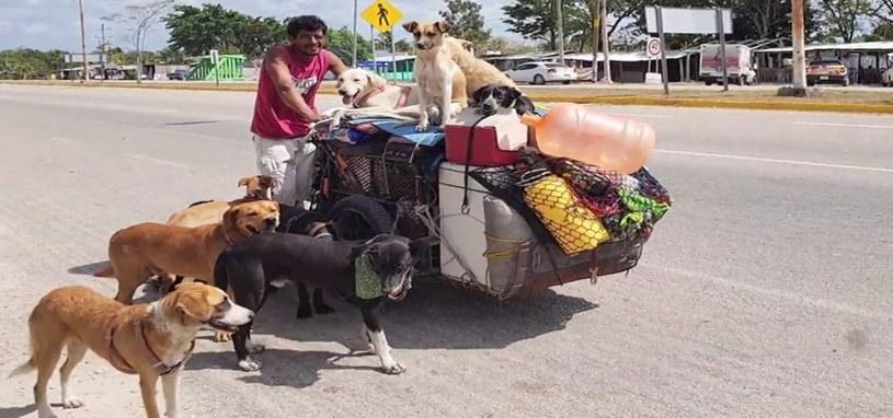 """""""Perros"""" podróżuje na rowerze z grupą najbardziej lojalnych psów /domena publiczna"""