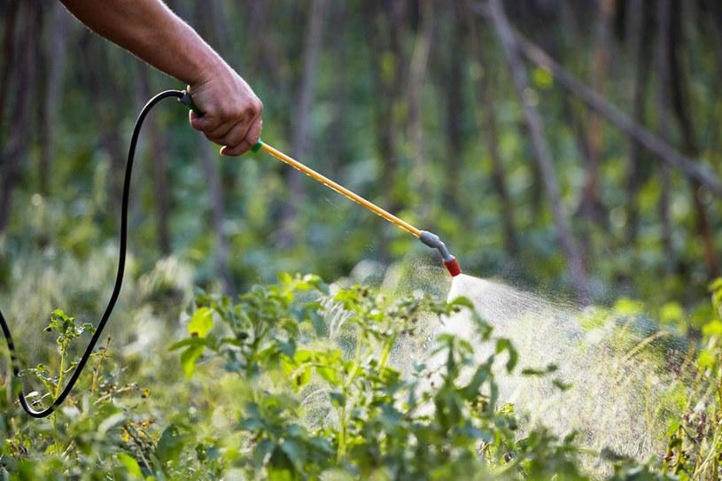 Pestycydy to nie tylko środki syntetyczne, ale również naturalne /123RF/PICSEL