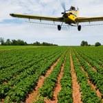 Pestycydy wywołują cukrzycę