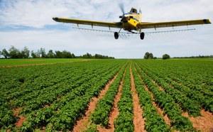 Pestycydy zabijają ptaki i pszczoły