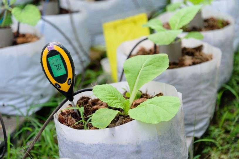 pH gleby można zmienić /123RF/PICSEL