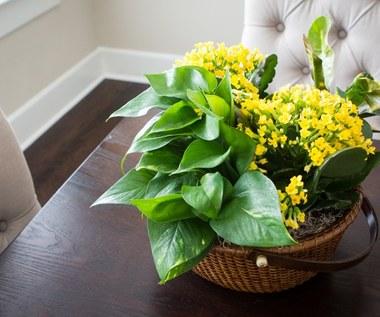 Pięć naturalnych nawozów dla kwiatów doniczkowych
