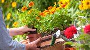 Pięć niebezpieczeństw, które czyhają na ciebie w przydomowym ogródku