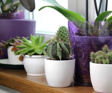 Pięć roślin, które najlepiej oczyszczają powietrze