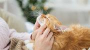 Pięć rzeczy, które sprawią, że twój kot będzie naprawdę szczęśliwy