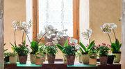 Pięć sposobów na ładne i zdrowe storczyki