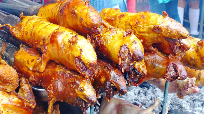 Pieczona świnka morska to powszechny przysmak w okolicach Andów /Picsel /123RF/PICSEL