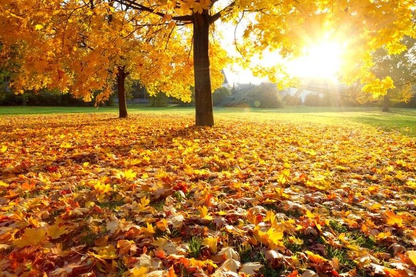 Piękna i słoneczna jesień /123RF/PICSEL