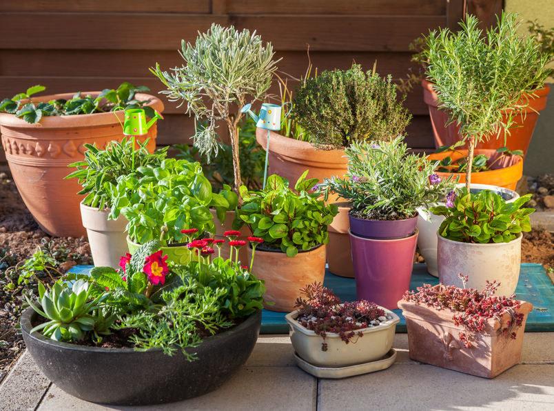 Piękne rośliny i zioła, które odstraszą owady /©123RF/PICSEL
