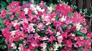 Piękne rośliny zwisające