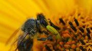 Piękno od pszczół