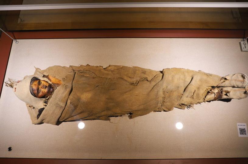 Piękność z Loulan jest obecnie wystawiona w Muzeum Xinjiang w Urumqi /Costfoto / Barcroft Media /Getty Images