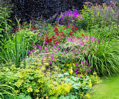 Piękny ogród i balkon