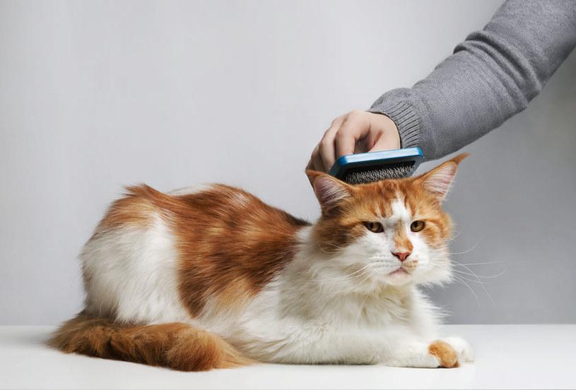 Pielęgnacja kota /©123RF/PICSEL