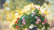 Pielęgnacja kwiatów doniczkowych na wiosnę