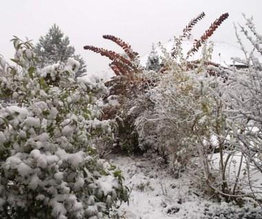 Pielęgnacja ogrodu zimą