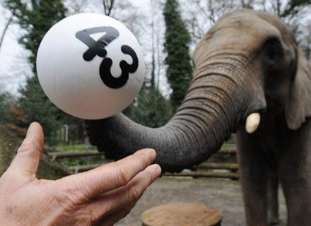 Pięniądze szczęścia nie dają, ale zagrać o nie... warto :) /AFP