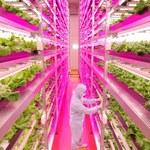 Pierwsza fabryka roślin już funkcjonuje w Japonii