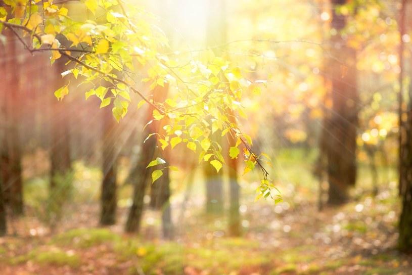 Pierwsza połowa kwietnia będzie ciepła i słoneczna /123RF/PICSEL