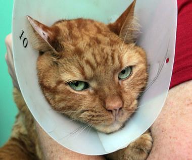 Pierwsza pomoc w oparzeniach u zwierząt
