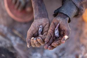 Pierwsza taka klęska głodu na świecie. Ludzie ratują się, jedząc owady