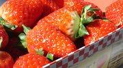 Pierwsze truskawki Made in France