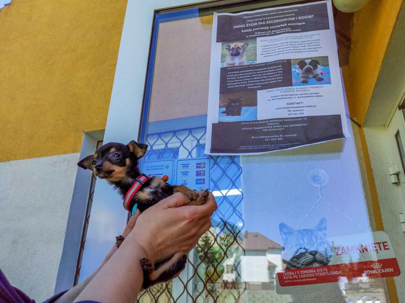 Pierwsze w Polsce okno życia dla zwierząt /Piotr Kamionka / REPORTER /East News