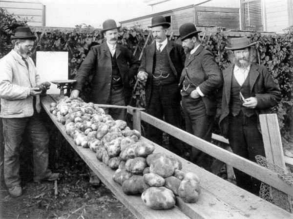 Pierwsze zetknięcie z ziemniakami nie było dla Brytyjczyków zbyt smaczne... /materiały prasowe
