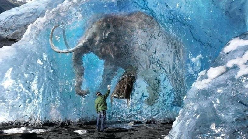 Pierwszy mamut pojawi się w Parku Plejstoceńskim na Syberii już za 6 lat /Geekweek
