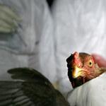 Pierwszy przypadek infekcji H10N3 u człowieka. Czy powinniśmy się bać kolejnej pandemii?