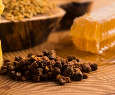Pierzga pszczela: Właściwości i zastosowania