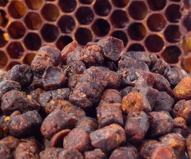 Pierzga pszczela: Właściwości, jak ją stosować?