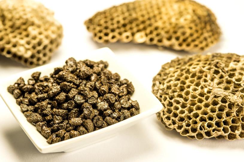Pierzga składa się z pyłku kwiatowego, miodu oraz śliny pszczół /123RF/PICSEL