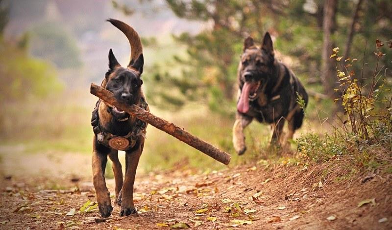 Pies biegający bez smyczy to nawet 250 złotych mandatu! /Pexels.com