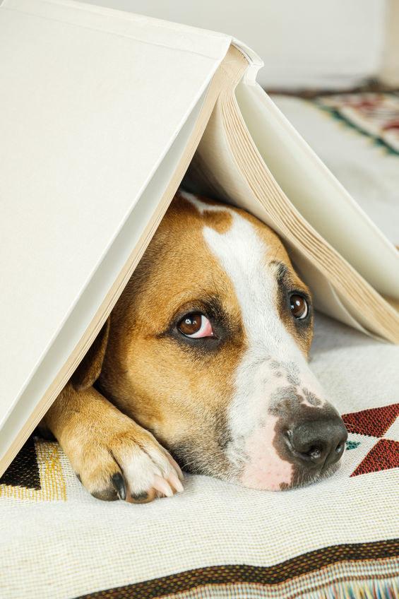 Pies chowa się w zakamarkach /©123RF/PICSEL