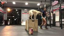 Pies ćwiczy z właścicielką na siłowni