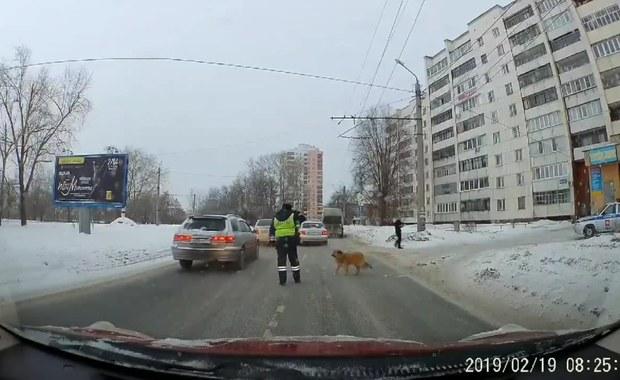 Pies czekał przy drodze. Policjant wstrzymał ruch, by go przepuścić