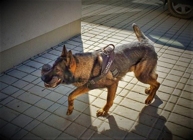 Pies Euro, pracownik straży granicznej /foto. bieszczadzki.strazgraniczna.pl /