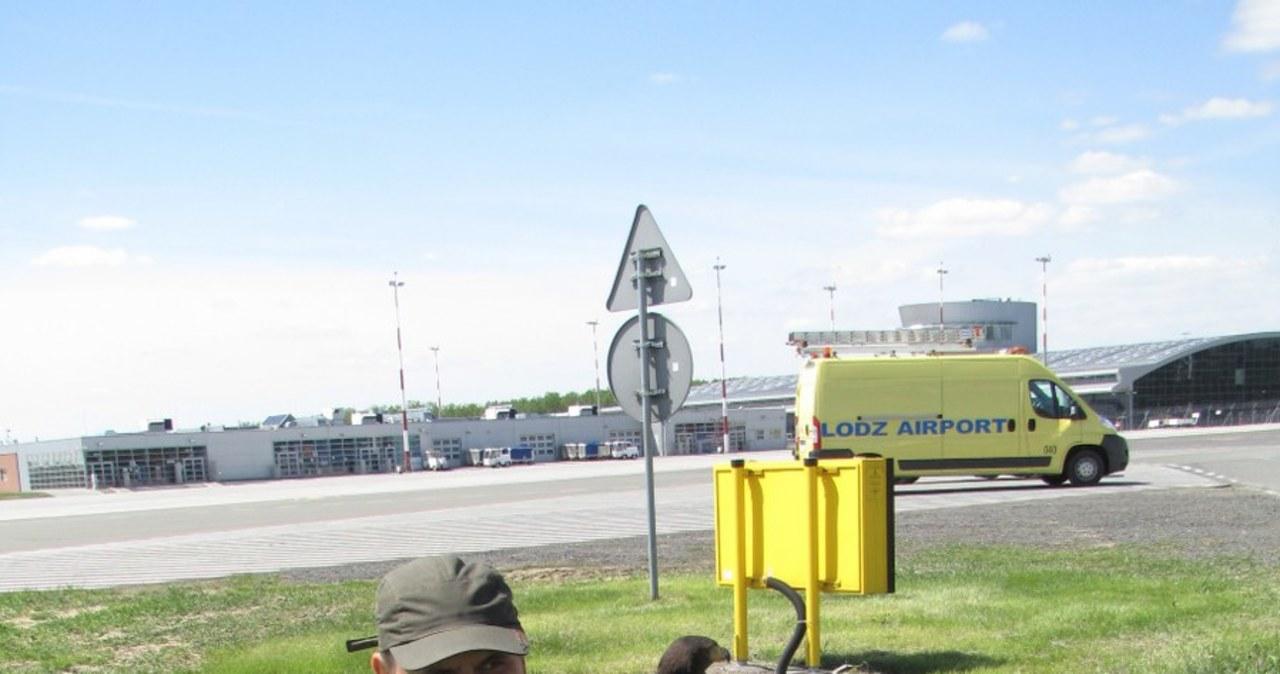 Pies Falco wypłoszy ptaki z łódzkiego lotniska